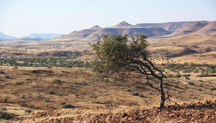 Namibia Palmwag