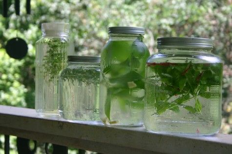 how to make lemon balm and mint tea
