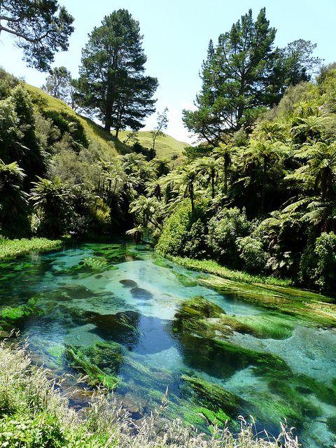 Te Waihou Springs, Putararu, New Zealand