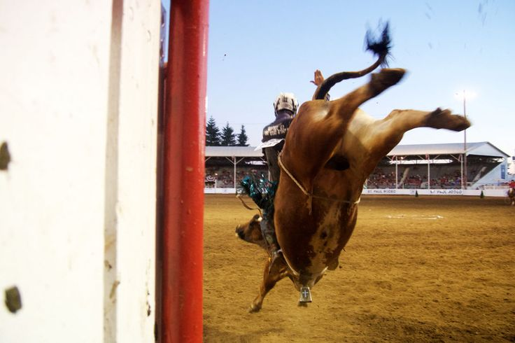 Bull riders battle it out at the St. Paul Rodeo