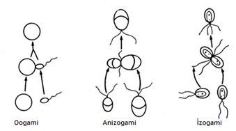 lisebiyoloji konular