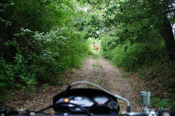 Hunting Photography Ordinary Mortal Blogspot.http://ordinarymortalgr.blogspot.ae/p/index.html