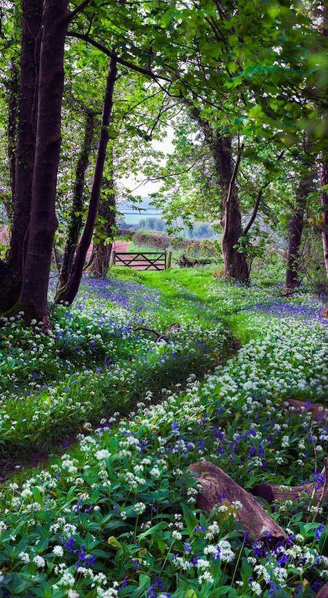 The pretty walk home in Plymouth, Devon, England • photo: Hazel Mansell-Greenwood on Flickr