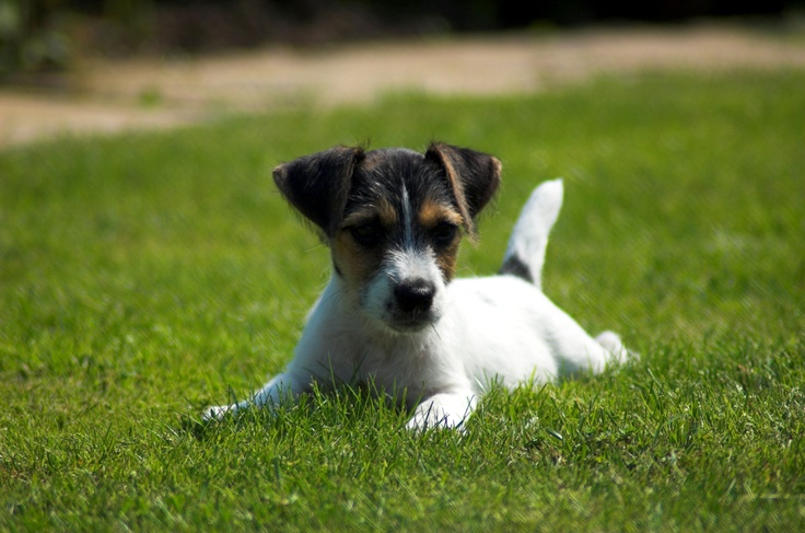 All animals are precious! Home wouldnt be the same without my Jack Russell Tonka!