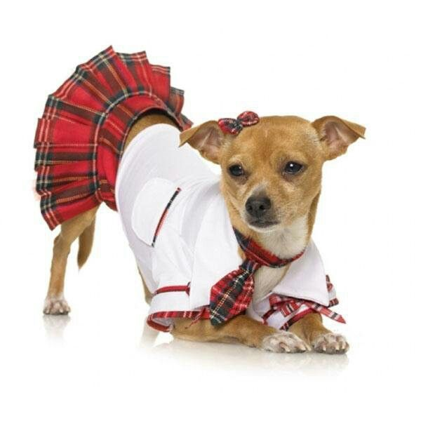 halloween dog costume - Dogs With Halloween Costumes On