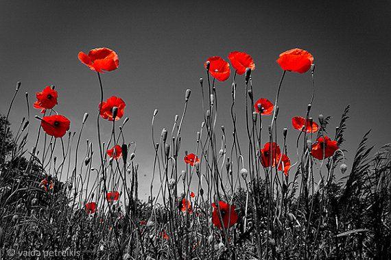 Zwarte en rode home decor. Klaproos weiland in de zomer voor uw huis, kantoor, enig ander gebied. Leuk idee voor een Remembrance Day. - - - - - - - - - - - - - - - - - - - - - - - - - - - - - - - - - - - - - - - - Titel: In de Descriptie... GROOTTE: 16x23.6 duim (40 x 60 cm) OVER deze PRINT: Fine-art fotografie gedrukte genomen door mij, Vaida Petreikis en professioneel gedrukt op mat papier van hoge kwaliteit. Het afdrukken zal worden ondertekend en gedateerd door mij en geleverd in…