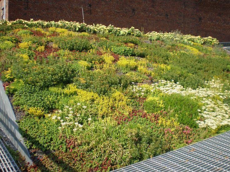 Blooming Sedum Summer 2009 In 2019 Landscape Ideas