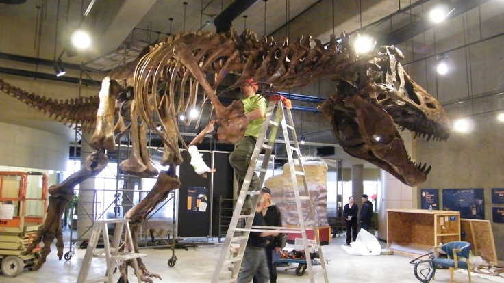Scotty the T-Rex is now back home where he belongs!  #GoHere to the T-Rex Discovery Centre in Eastend to pay him a visit! #Saskatchewan