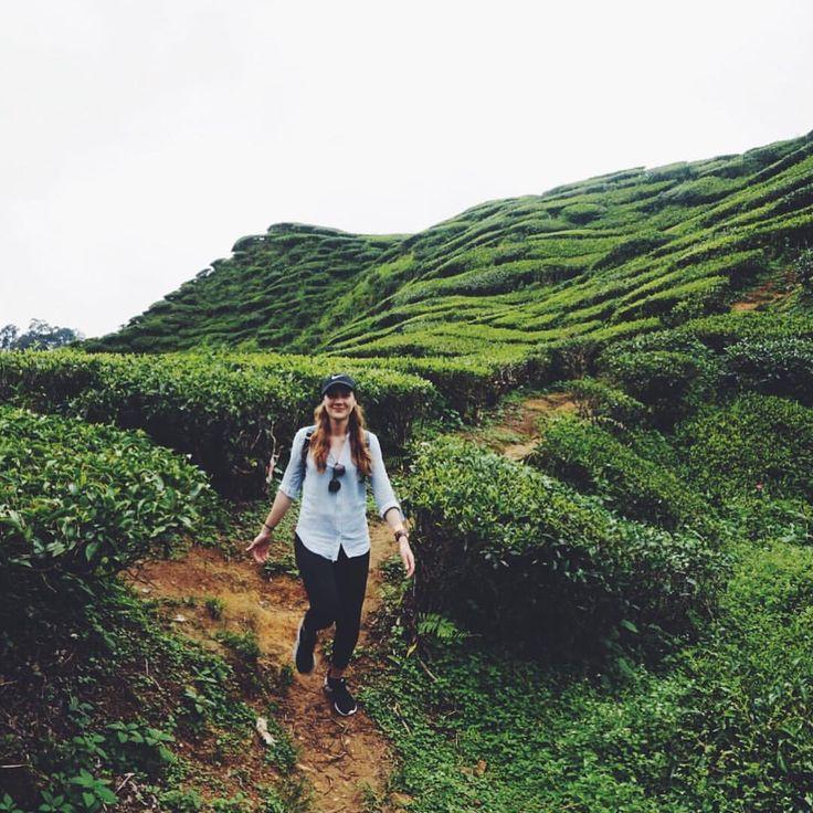 "Exploring the Tea Plantations in Cameron Highlands, Malaysia - 105 Likes, 5 Comments - Sarah   Ranga Adventures  (@rangaadventures) on Instagram: ""Go explore ✈️  Cameron Highlands, Malaysia ---------------------------- #traveljournal…"""