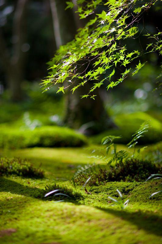 Mossy garden - Kyoto: