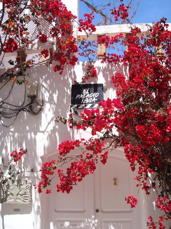 Dalt Vila, città vecchia Ibiza, case tipiche ibiza, immagini cani ,lifestyle ibiza vacanze, amanda marzolini the fashionamy blog
