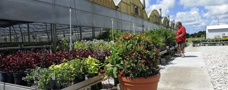Wagon Wheel Plants is the best local plant nursery and garden center serving Parrish, Bradenton and Sarasota residents for retail and business wholesale plants