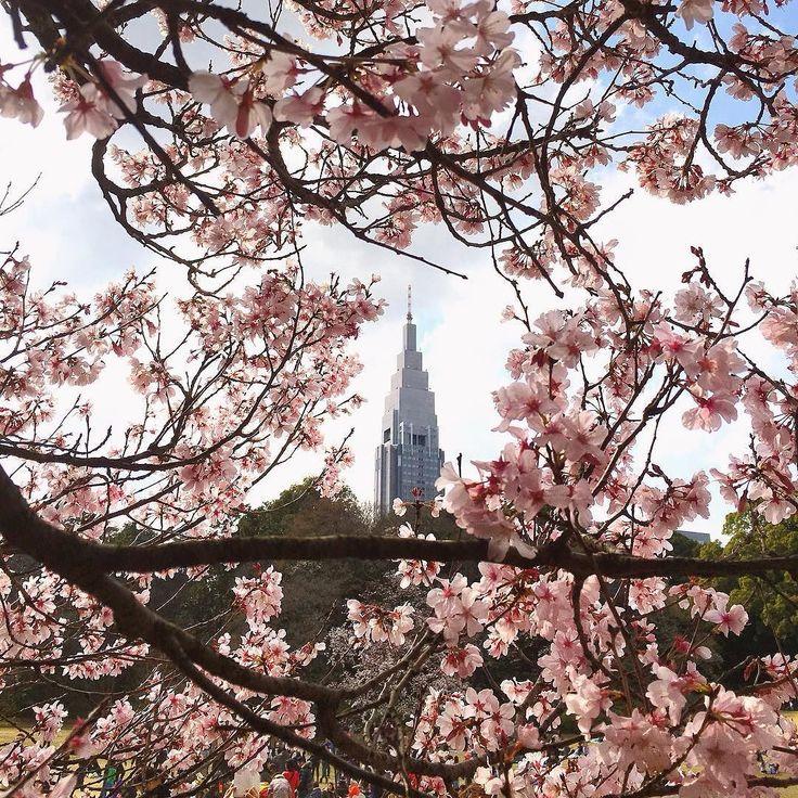 Sakura season has come  明日からエクストリーム出社期間の始まりです 毎朝早朝に桜を撮って出社する予定です エクストリーム出社したい方は是非ご一緒しましょう  iPhone6s / native camera / Enlight / RNI films  #mwjp #grryo #youmobile #amselcom #ig_captures #ink361_asia#shootermag_japan #pgdaily #artvisuals #huaert_life #myfeatureshoot #artofvisuals #aovmashable #igersjp by johnny777