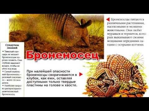 Энциклопедия для детей. Буква Б. Броненосец.