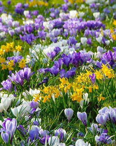 https://i.pinimg.com/736x/e7/9e/78/e79e7828924493c9f5f83298f1cb6b01--signs-of-spring-spring-bulbs.jpg