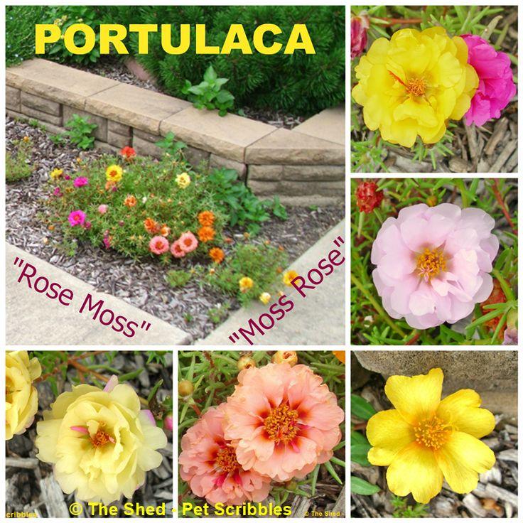 Single Flower Garden : Best garden my plants images on pinterest