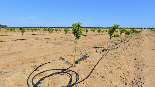The California Secretary of Agriculture Couldn't Be More Wrong About the Drought   Mother Jones