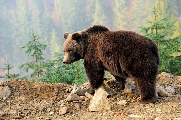 România, în atenția presei internaționale. Sacrificarea animalelor sălbatice ascunde afaceri de milioane de euro