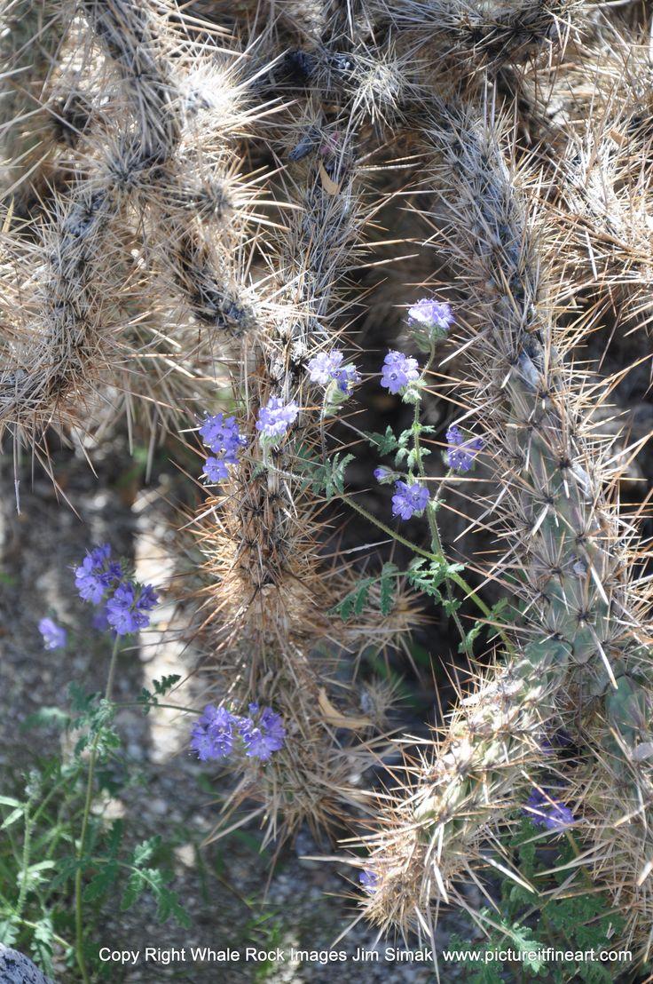 Anza-Borrego Desert St.Pk. Borrego Springs, CA
