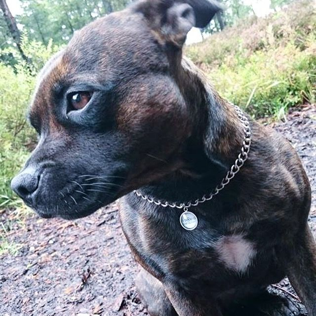ID dog necklace