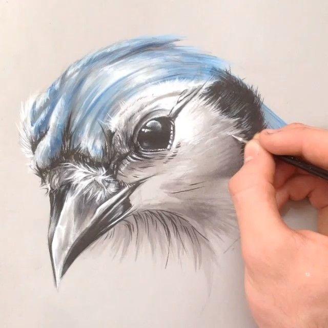 sol whiteside artist blue jay