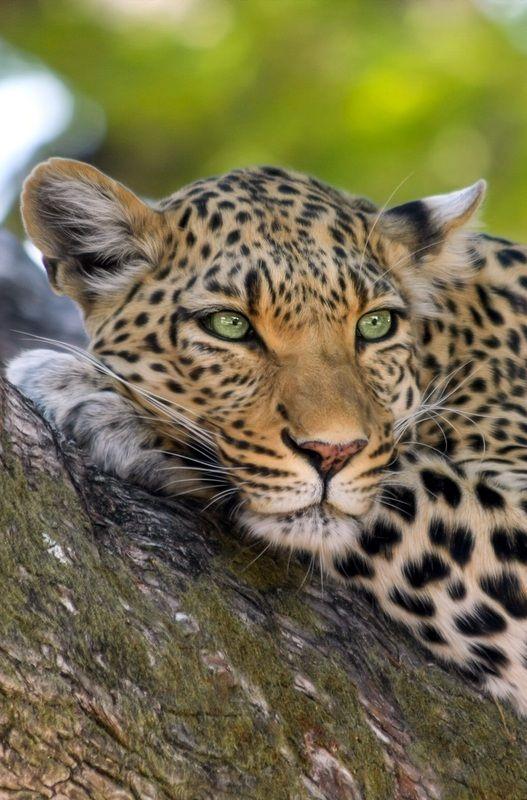 6 African National Parks to Visit Before You DieHannah Kock