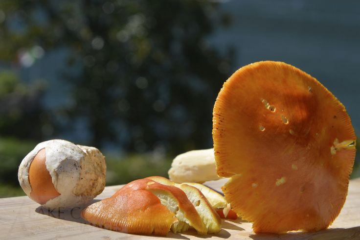 Lario food - Ovuli del Lario_ Ovules of Lario