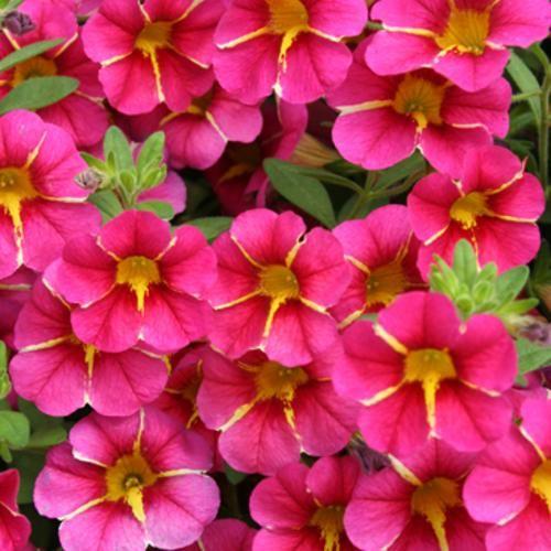 #Flower, Flowers, Garden, Gardens, Nature, Photography