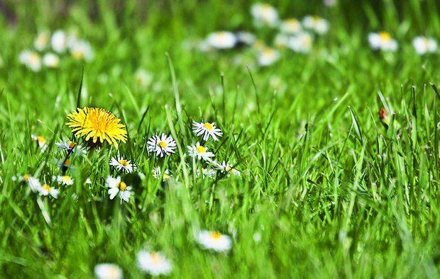 Har du planer om at anlægge en græsplæne? Find inspiration og gode råd her
