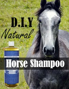 DIY Natural Horse Shampoo Recipe | Savvy Horsewoman