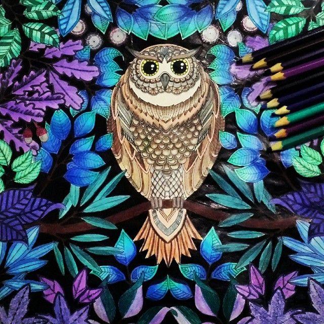 Partilhado Com Instagrab Garden OwlJohanna Basford Secret GardenAdult ColoringColoring