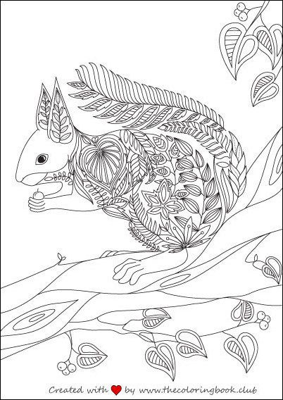 Squirrel Coloring Page Adult PagesColoring BooksColouringZen