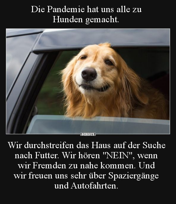 Die Pandemie Hat Uns Alle Zu Hunden Gemacht Lustige Bilder Witze Lustig