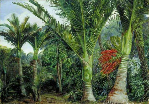 MARIANNE NORTH - Group of Nikau Palms with the Background of the Kawa Kawa, New Zealand