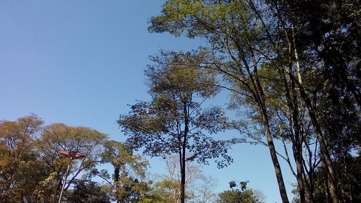 Céu do Bosque do Mutirama - Goiânia - Goiás - Brasil Fotografia: Sônia Maria www.falandodecrochet.blogspot.com