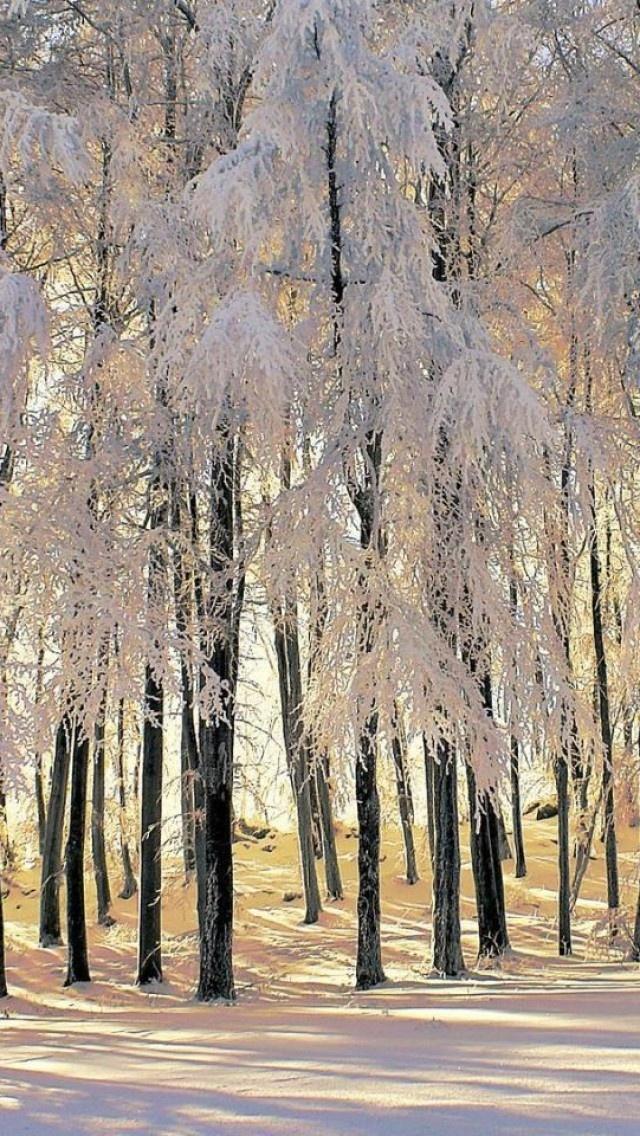 Forest, Snow, Nature, Landscapes www.tutorbuddies.com #tutor #students #college #university #study #school #travel #ideas