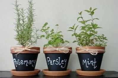 Fun Indoor Herb Garden Pots