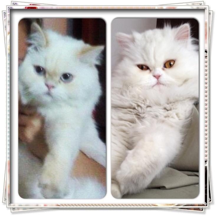 Mili & Luna