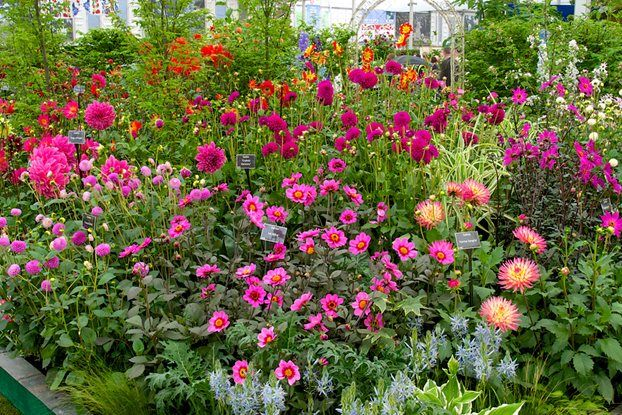 The National Dahlia Collection
