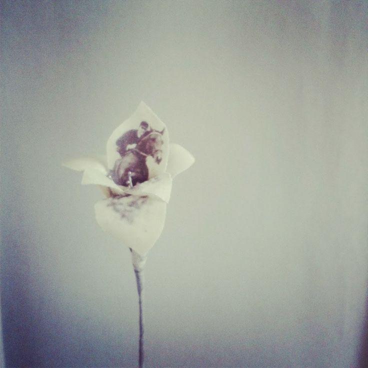 Puur Anders gladiolus