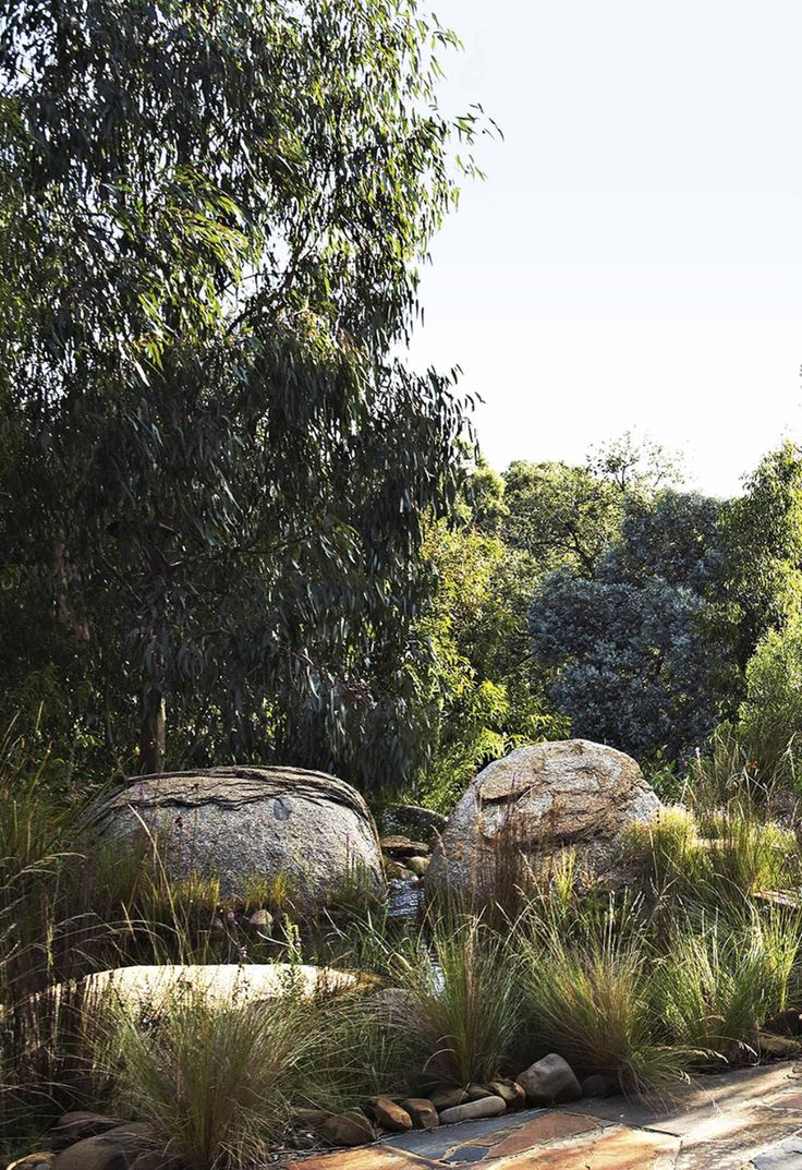 A native bushland garden in the heart of Melbourne in 2020 ...