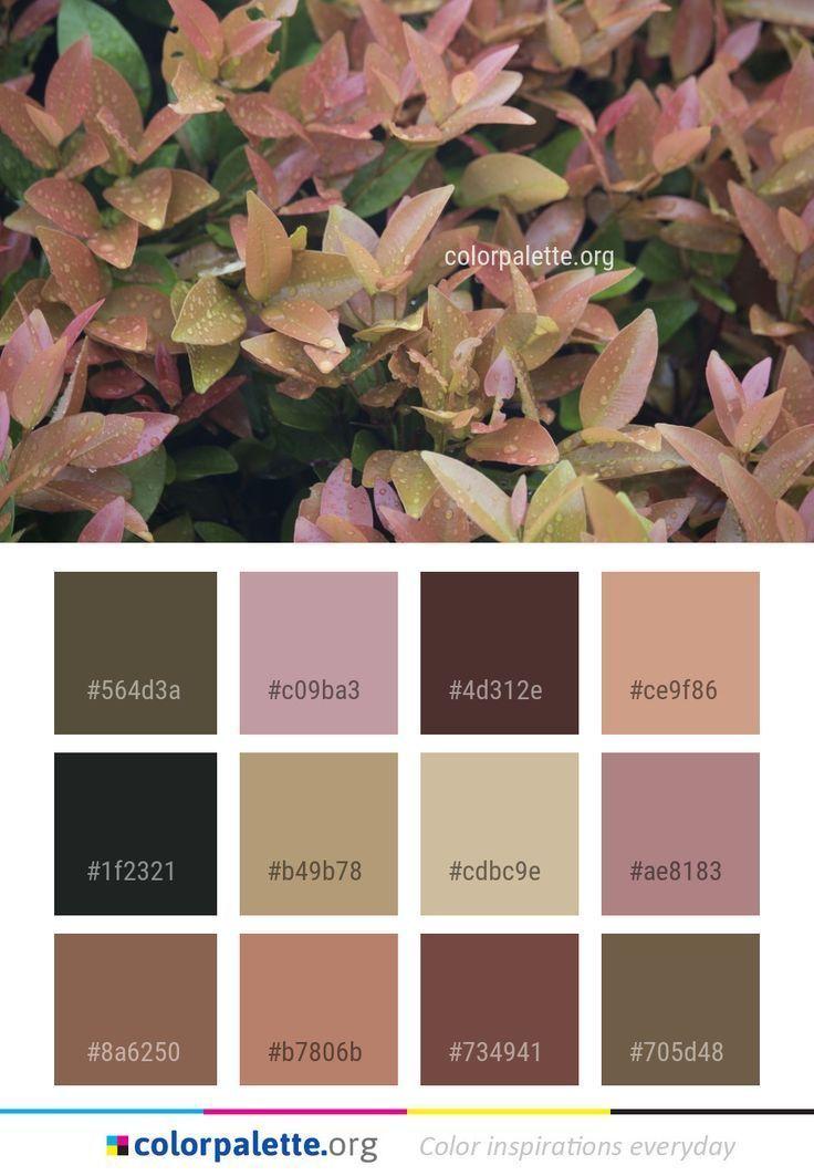 Best Pictures Autumn Color Palette Home Diy Technology Autumncolorpalette Best Pictures Autumn Vintage Colour Palette Fall Color Palette Rustic Color Palettes