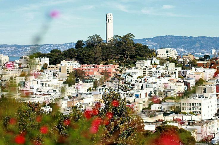 The Coit Tower as seen from Russian Hill San Francisco by Eleni Ks Photography #sanfrancisco #sf #bayarea #alwayssf #goldengatebridge #goldengate #alcatraz #california