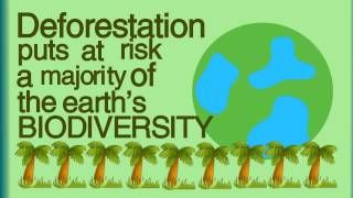 A great video to visually explain deforestation and what has happened to the world because of it. The images included in the video are kid friendly as well. The length is appropriate for an elementary level learner.