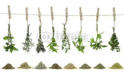 Wallpaper Fresh herbs hanging on a rope