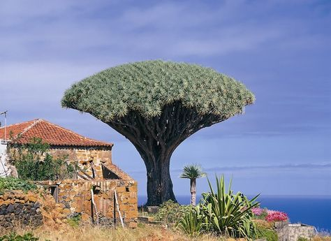 Tenerife, largest of the Canary Islands, has loads to offer families, from whale watching to volcano climbing to enjoying the beach and more.