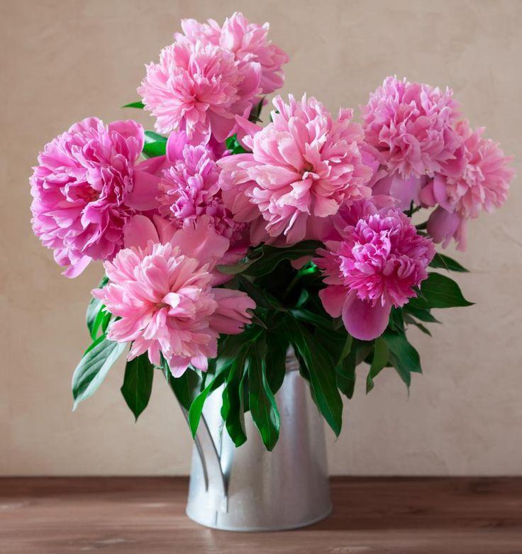 красивые фото пионов в вазе приготовить гороховый