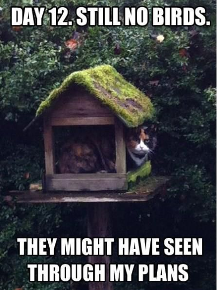 This is to cute, I had to share it.  Reminds me of our bird feeder only our cat is not real.