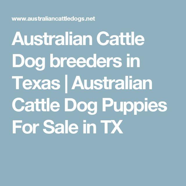 Australian Cattle Dog breeders in Texas | Australian Cattle Dog Puppies For Sale in TX