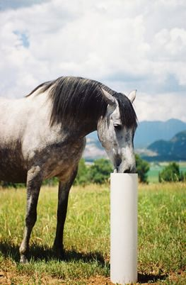 The Drinking Post Automatic Horse Waterer Energy Free